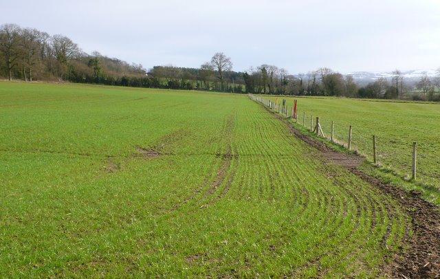 Fields near Lillington Dorset.