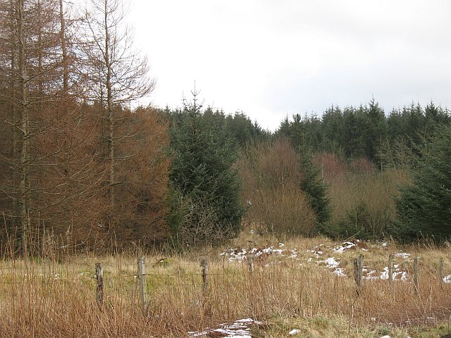 Carron Valley Forest