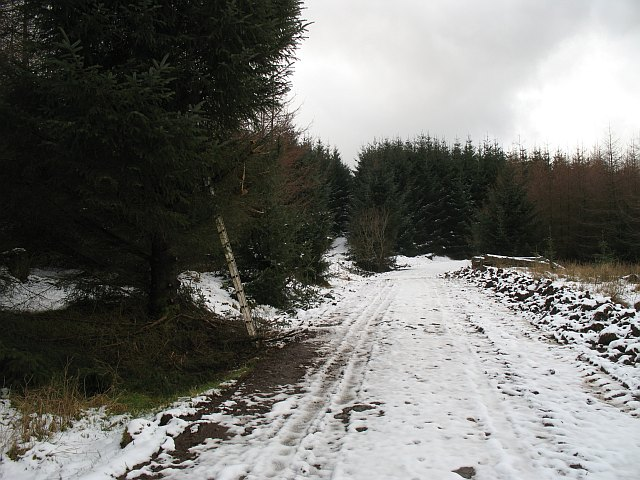 Forest road, Gartcarron