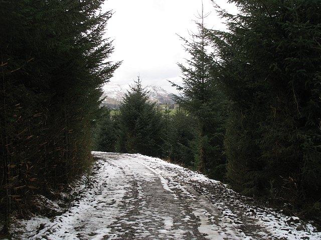 Forest road, Gartcarron