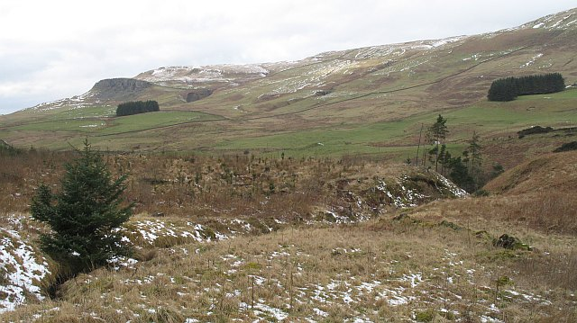 Forest at the head of Strathendrick