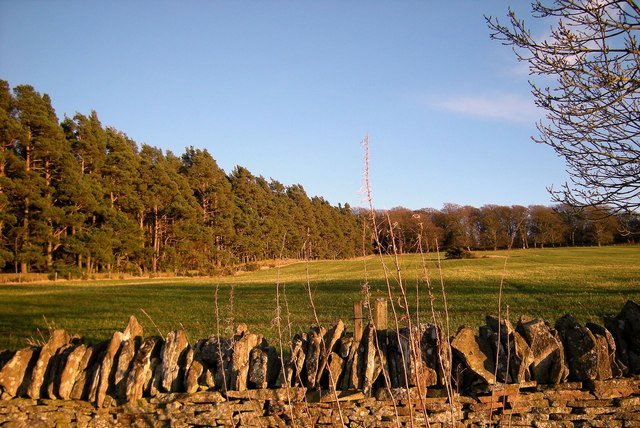 View of grass field and Forest, just to the west of Kinpurnie Castle