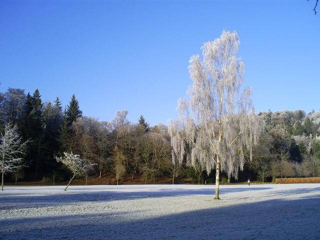 Tree in Wilton Park Hawick