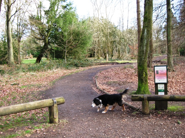 Start of All Ability Trail, Wendover Woods