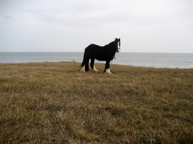 Horse above Lynemouth Bay