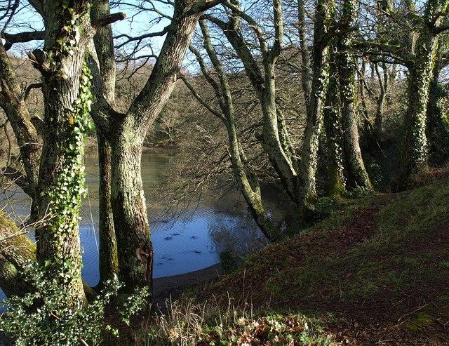 Trees beside Marsh Combe