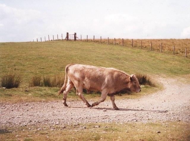 Summit of Brondre Fawr Hill