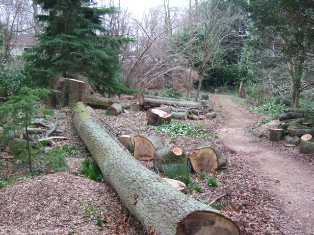 Felled trees and footpath at Brunel Manor
