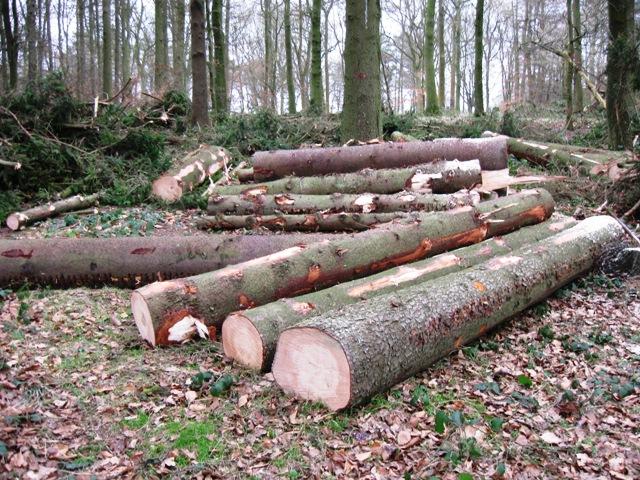 Freshly cut logs, Wendover Woods