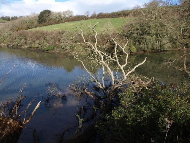 Fallen tree, Marsh Combe