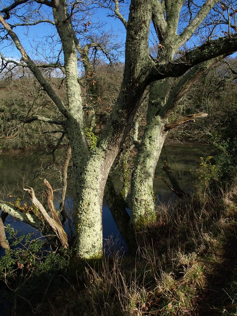 Trees by Marsh Combe