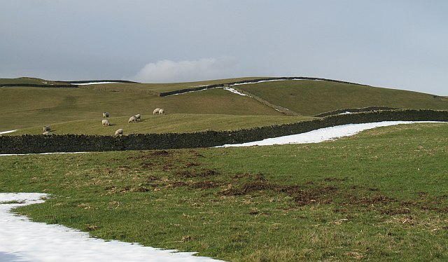 Grazing sheep near Kendal