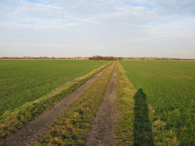 Long evening shadow on Chislet Marsh