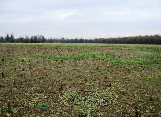 View across former Clay Farm fields