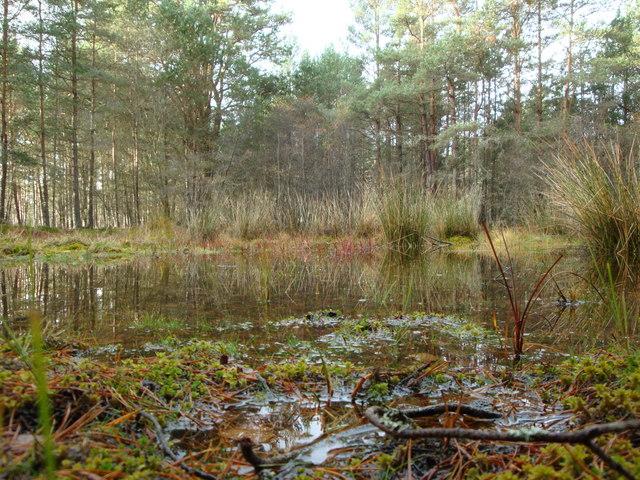 Woods near Dulnain Bridge