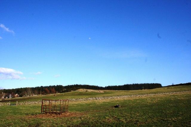 Wedderhill field