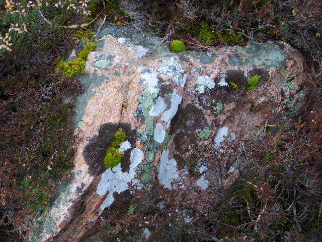 A colourful collection of lichens