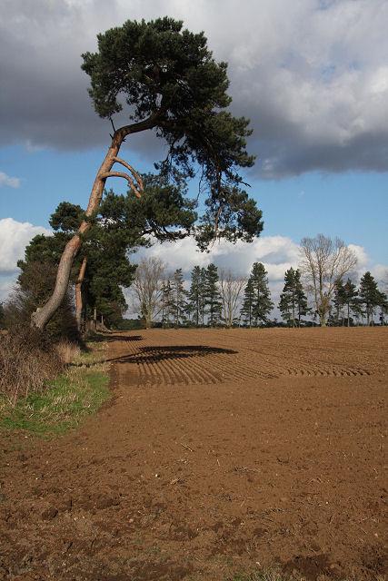Farmland near Red Lodge