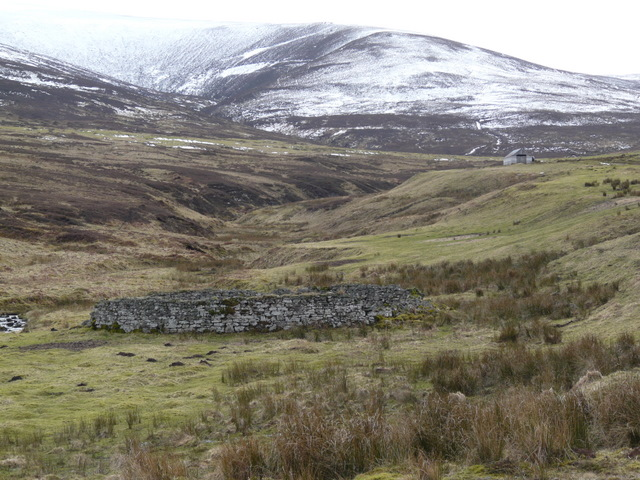 Sheepfold near Killearnan