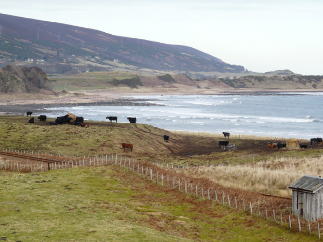Shoreline near Ballinreach