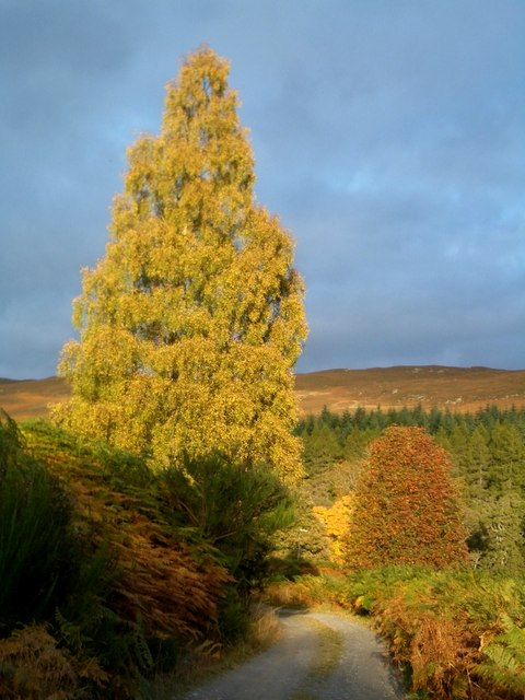 Atholl Woods, Autumn
