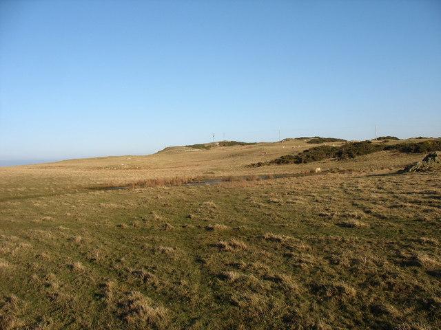 Sheep grazings on Wylfa Head