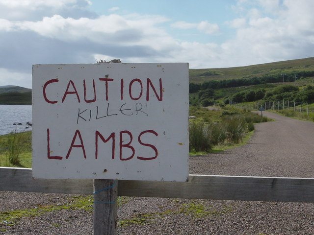 Caution Killer Lambs