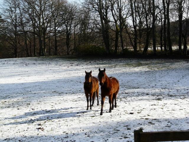 Ponies at Cambusmore Lodge