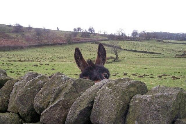 Walls Have Ears! ... Mill Lee Road, Low Bradfield