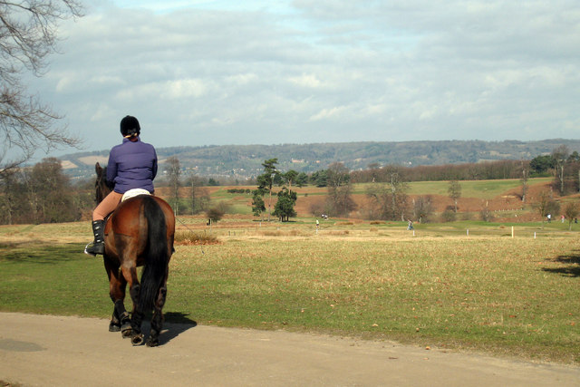 Horse and Rider at Knole Park
