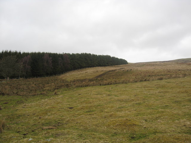 Grazing land and a strip of evergreens near the Inch