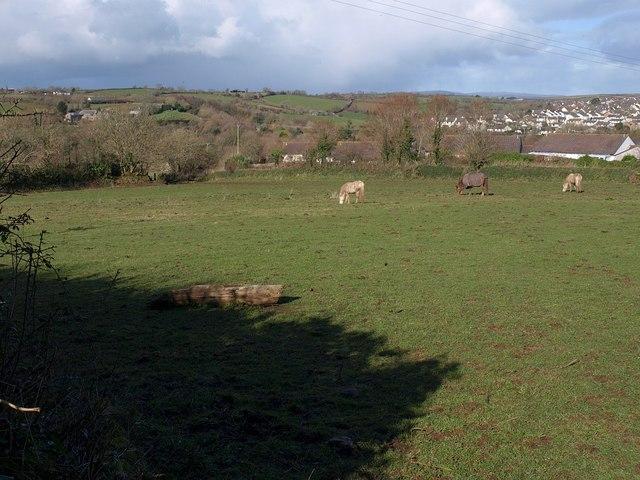 Field, Churchtown Farm