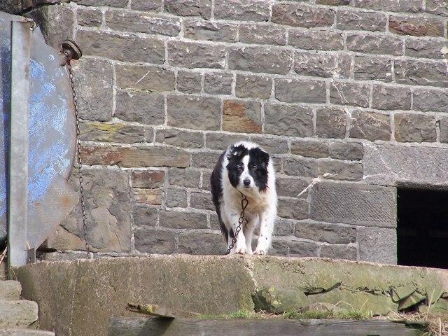 Are You Looking At Me ... Are You looking At Me? Wood Side Farm, Ughill Wood Lane, Ughill Height