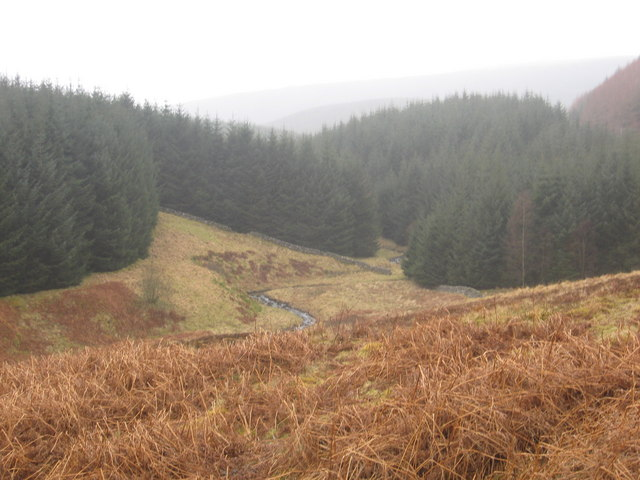 Forest land at Ritty Cleuch