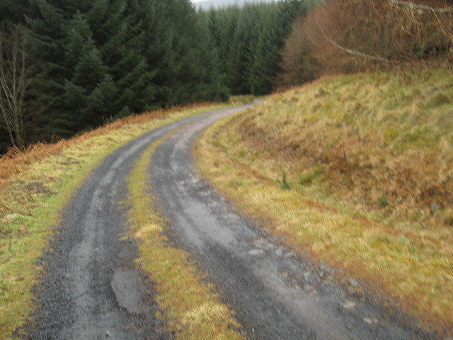Track through the forest to Berrybush