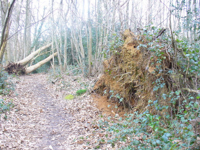 Greensand Way, Glory Wood