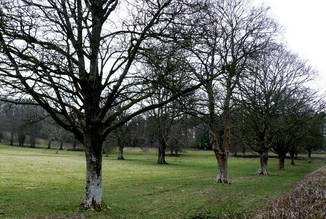 Parkland Minterne Magna