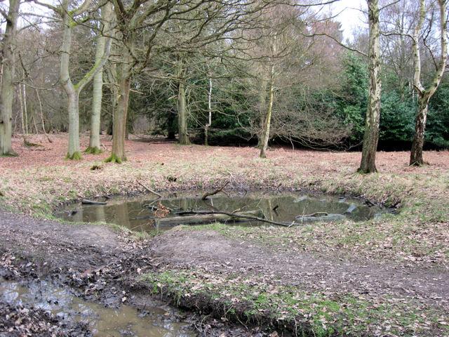 A Round Woodland Pond at Ashridge