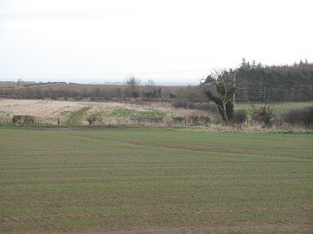 Farmland east of Wandylaw