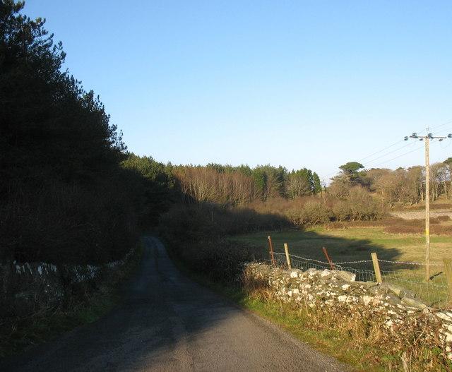 In the shadow of Coed Wylfa woodland