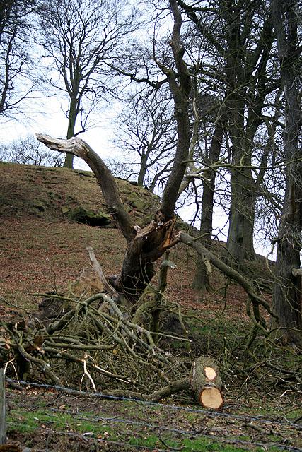 Fallen Tree on Peak Tor