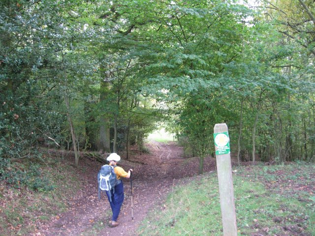 Hereford trail near Bacton