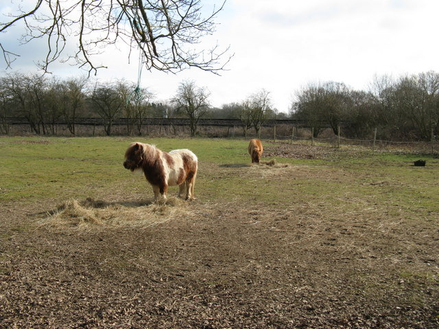 Ponies near railway