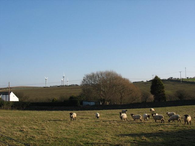 Sheep at Pen-y-bryn