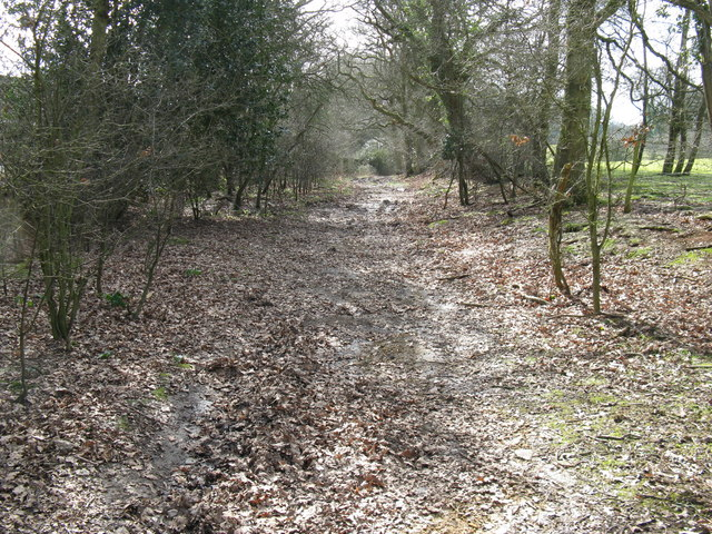 Bridleway to the east of Beeding's Copse