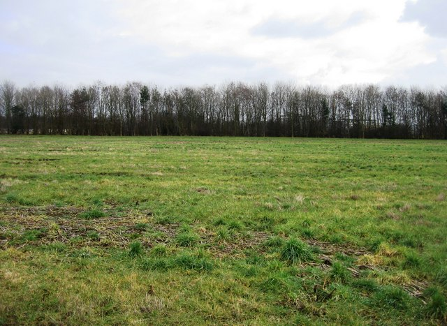 Fallow field & trees