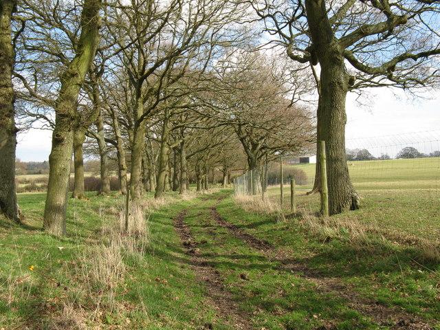 Tree lined bridleway to Steepwood farm