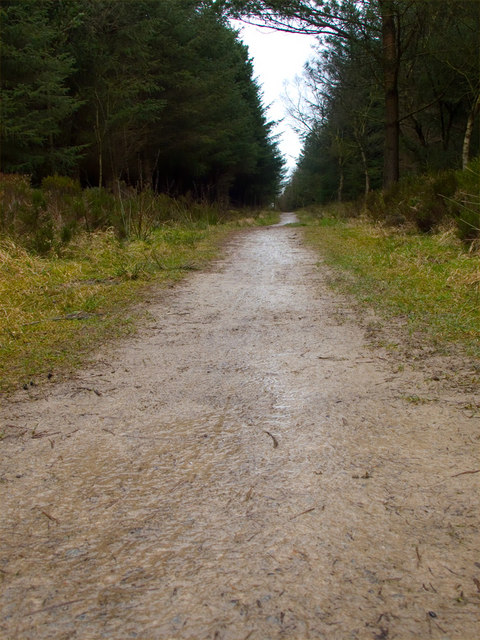 Path to Raptor Viewpoint, Wykeham Forest