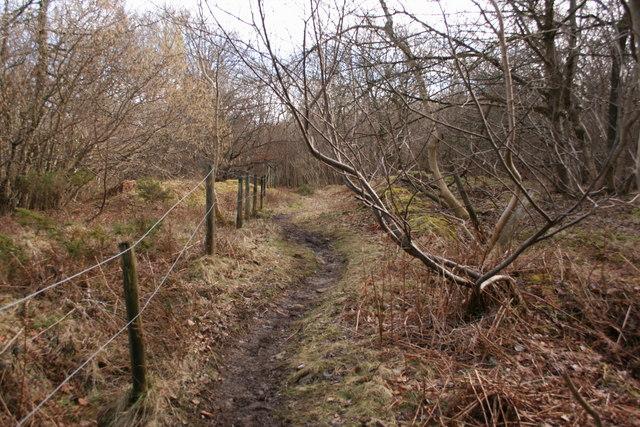 Sandford Wood