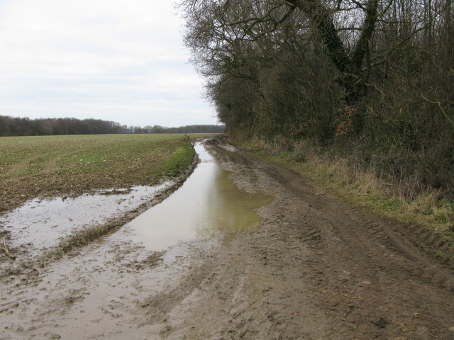 Field boundary alongside Waddenhall Wood
